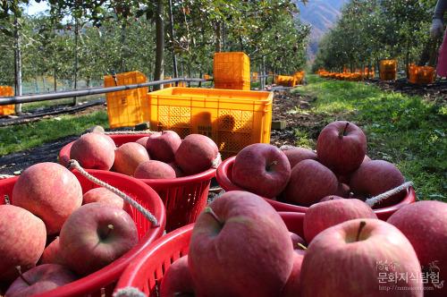 전국 1위, 안동 사과를 '알아보자'