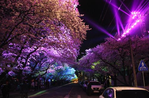 2017 안동벚꽃축제 공식 일정