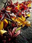 [EX1] 낙엽…
