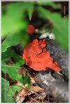 2012 여름, 불암산 야생버섯
