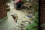 [로모] 강아지 루이와 루루