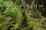 제주 곶자왈 생태탐방숲, 신비로움 가득 간직한 비밀의 숲