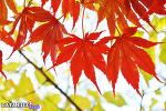 가을의 시작! 티스토리 초대장 배포 SEASON 2