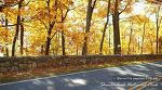 버지니아의 가을은 황금빛으로 물들고... 셰넌도어밸리 단풍여행