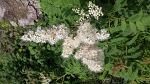 발왕산 마루와 둘레를 돋보에게 하는 꽃과 나무들