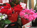 일본의 어버이날인 어머니의 날(하하노히 母の日)은 어떤 모습일까?