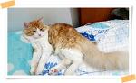 브라질에 간 고양이 망고 이야기 고양이 중성화의 중요성