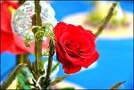 대구 꽃 박람회