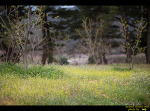 영덕군 지품면과 경주 양동마을의 꽃들...