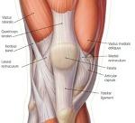 운동할때무릎 앞쪽이 아프신가요? 그럼 슬개건염을 의심해보세요 ( 무릎통증 목동 영등포 여의도 양평동 당산 당산역 정형외과 도수치료 통증의학과 재활의학과 박상준의원)