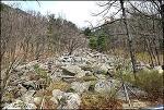 비슬산 암괴류 ( 천연기념물 435호)-돌너덜겅