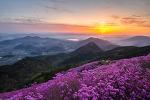 천주산의 봄