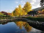 <제천> 배론성지 가을 - 단풍 참 예쁩니다