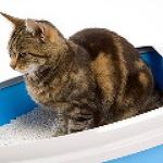 반려동물 고양이 변비의 증상, 원인과 해결방법