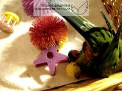 ♡ 물구나무서기 연습