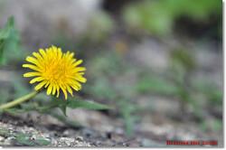 [대한민국]봄꽃들...