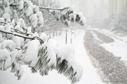 [촬영 팁] 눈(雪)사진과 노출보정의 원리의 이해