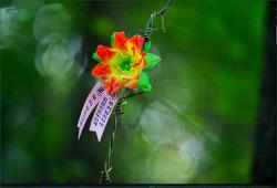 이미지 - 15 (불교)