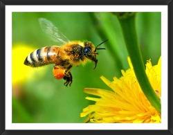 꿀벌이 만든 자연의 선물, 봉교(프로폴리스)!