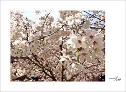 봄의 숨결을 느끼며...