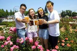 '장미 만발' 에버랜드에서 즐기는 수제 맥주 축제