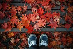 가을이 가는 풍경...