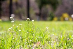2016년 봄철 식재료 정리2탄 (봄볕받고 자라는 들나물과 봄채소, 해산물)