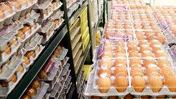 1인 1판 계란 대란으로 바라 본 안전한 밥상 물류