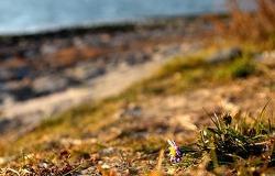 5월의 다대포 바닷가의 봄