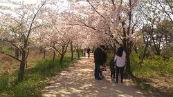 즐길 거리가 가득했던 세계평화의숲 봄축제 이야기