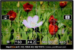 1년간 써온 니콘 D5500, 화질 휴대성 성능 만족하는 DSLR 카메라!