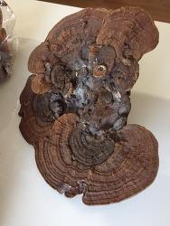 버섯 감정의뢰 들어온 사진 기록 (산원초)