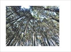 편백숲 명상의 길에서...