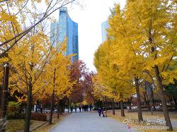 서울숲 단풍 데이트~ 아름다운 은행나무길, 노랗게 물들었어요!