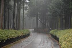 제주도 절물자연휴양림 삼나무 숲길을 걷다