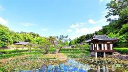 (사진여행)초록이 가득한 선교장에서 안구 정화를 한다.