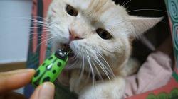 고양이 장난감 펫모닝 로봇버그 무당벌레