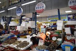 서천특화시장 새조개 크기 비교 - 로또 수산