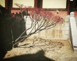 극락암자의 봄