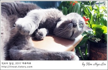 [적묘의 고양이]the 만지다.12살 러블, 몽실양 러블리한 궁디팡팡 자세(feat,군자란)