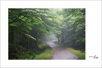 [제주] 사려니 숲길에서....