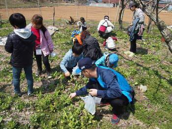 봄나물 수확하기