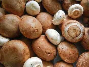 맛있는 양송이 버섯 효능 - 양송이 버섯의 효능