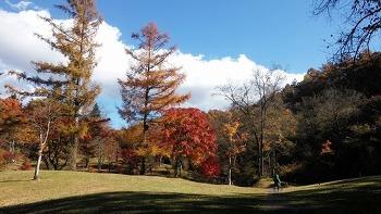 카루이자와(軽井沢)의 가을
