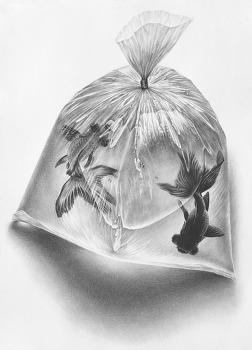 [정물소묘/구성]물이 든 비닐봉지, 금붕어 과정작