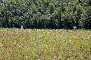 공업도시 울산의 이미지를 변모시킨 태화강대공원!(울산명소)