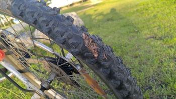 [DIY] 자전거 타이어 셀프 교환 방법, 후기