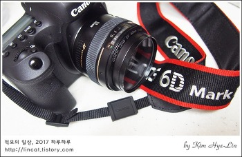 [적묘의 카메라]캐논,EOS 6D Mark II,6디마크투,쩜사렌즈,단렌즈 마운트, 당연히 고양이