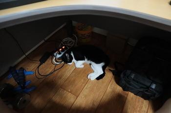 [고양이] 언제 왔는지 모르게 책상 밑에 와서 자는 냥이