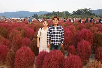 [양주 데이트 코스]양주 천일홍 축제 나리공원 가을 데이트